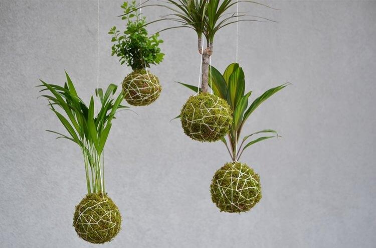Kokedama Bonsai - Spagmoss moss balls