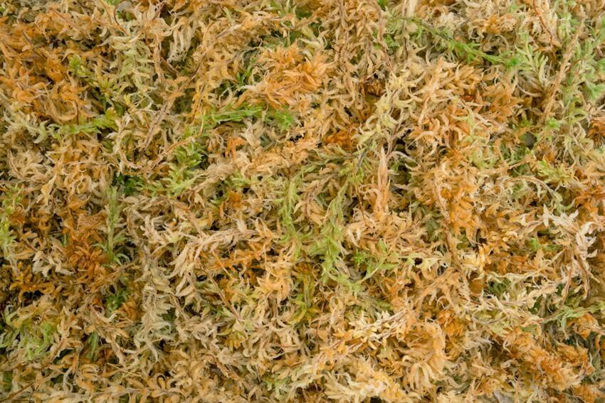 sphagnum moss - spagmoss classic