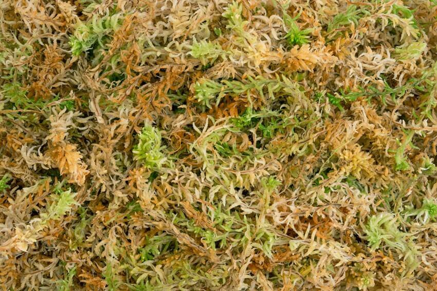 sphagnum moss - spagmoss premier