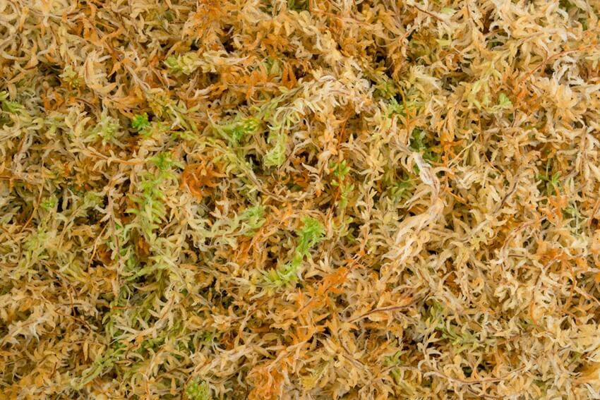 Spagmoss Sphagnum Moss - At the Root of Healthier Plants