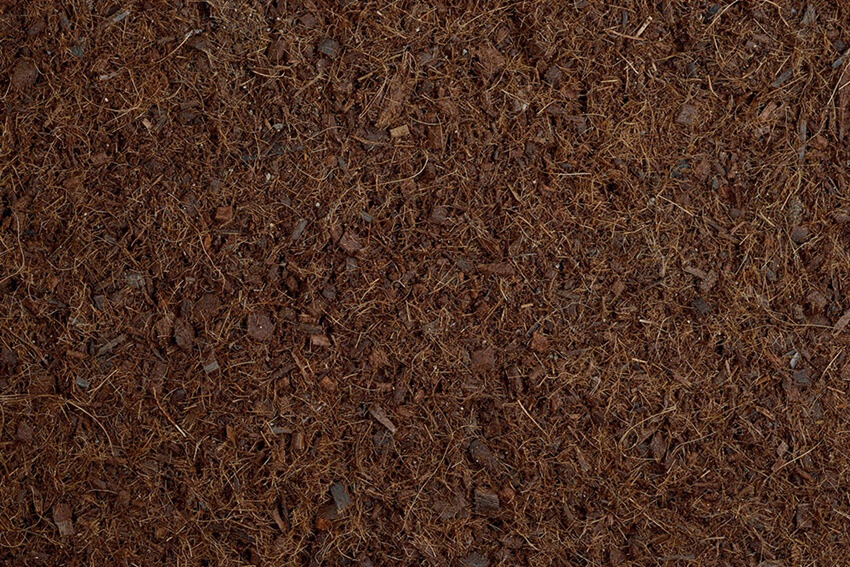 Coir - Coco Coir from Coconut Husks - Growing Healthy Plants
